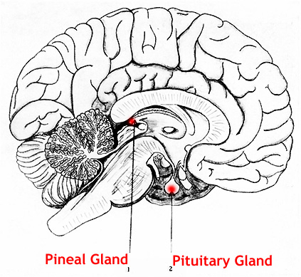 The Piezoelectric Effect and the Pineal Gland in the Human Brain